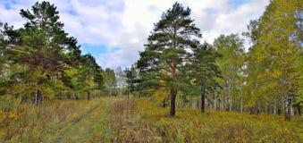 Sendero en el bosque del otoño - panorama Foto de archivo libre de regalías