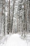 Sendero en el invierno Fotos de archivo