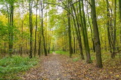 Sendero en el parque de Kuzminki, paisaje del otoño Imagen de archivo libre de regalías