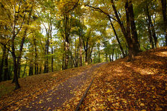 Sendero en el parque de la ciudad del otoño derramado con licencia caida amarillo Foto de archivo