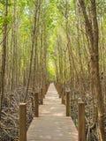 Sendero en el parque nacional del mangle, el golfo de Tailandia fotografía de archivo