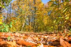 Sendero en un bosque en el otoño, visión de tierra con las hojas Foto de archivo