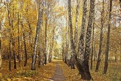 Sendero entre los abedules y los arces en otoño Imagen de archivo