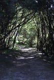 Sendero natural con los árboles en silueta Fotografía de archivo libre de regalías