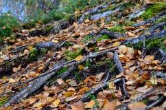 Sendero salvaje hermoso cubierto con las hojas de otoño caidas Imagen de archivo libre de regalías