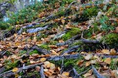 Sendero salvaje hermoso cubierto con las hojas de otoño caidas Fotografía de archivo libre de regalías