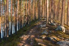 Sendero sobre un esker con los árboles de pino Imágenes de archivo libres de regalías