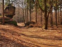 Sendero turístico en bosque del otoño. Foto de archivo libre de regalías