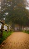 Sendero y árbol en niebla Fotos de archivo