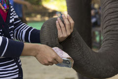 Sending money to the Elephant Stock Photos