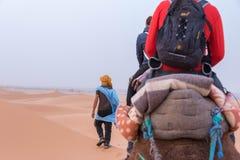 Sendo guiado através do deserto de Sahara em um camelo Fotos de Stock Royalty Free