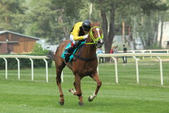 Sendwire in steeplechase in Lysa nad Labem Stock Image