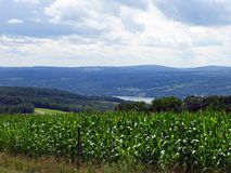Corn field crop lies high above Seneca Lake. Seneca Lake is the largest of the glacial Finger Lakes of the U.S. state of New York, and the deepest lake entirely stock images