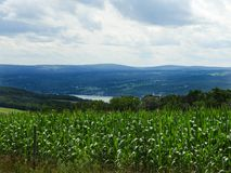 Corn crop high above Seneca Lake in hazy, hot summer. Seneca Lake is the largest of the glacial Finger Lakes of the U.S. state of New York, and the deepest lake royalty free stock photo