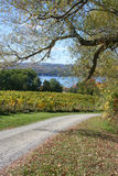 Seneca Lake Vineyard in Autumn. Autumn view of a vineyard on Seneca Lake, New York State, in the heart of the Finger Lakes wine country stock image