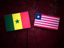 Senegal flag with Liberian flag on a tree stump isolated. Senegal flag with Liberian flag on a tree stump Royalty Free Stock Photography