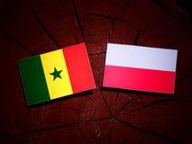 Senegal flag with Polish flag on a tree stump isolated. Senegal flag with Polish flag on a tree stump royalty free illustration