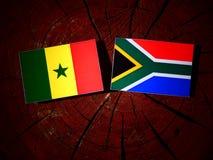 Senegal flaga z południe - afrykanin flaga na drzewnym fiszorku odizolowywającym Obraz Stock