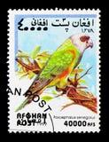 Senegal papegoja (den Poicephalus senegalusen), papegojaserie, circa 1999 Royaltyfri Bild