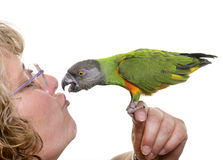 Senegal parrot kissing his owner Royalty Free Stock Photography