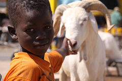 Senegalese Boy Plays with Sacrificial Sheep. A Senegalese boy in an orange shirt touches the nose of a sheep at a street-side market in Dakar where animals are Royalty Free Stock Image