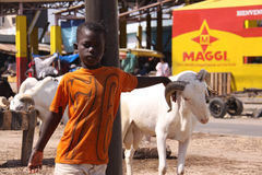 Senegalese Boy with Sacrificial Sheep. A Senegalese boy in an orange shirt grabs the horn of a sheep at a street-side market in Dakar where animals are sold for Stock Images