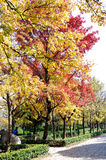 Senery φθινοπώρου Στοκ Εικόνες