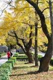 Senery d'automne Photo stock