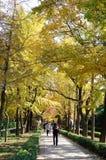 Senery d'automne Photographie stock