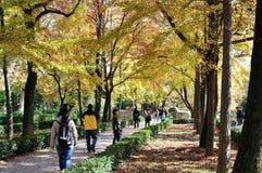 Senery del otoño Imagen de archivo libre de regalías
