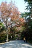 Senery del otoño Fotos de archivo libres de regalías