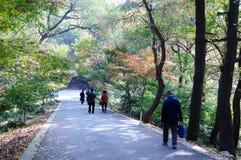 Senery del otoño Fotos de archivo