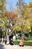 Senery di autunno Immagini Stock