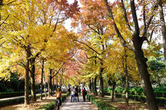 Senery di autunno Fotografie Stock Libere da Diritti