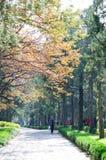 Senery do outono Fotografia de Stock