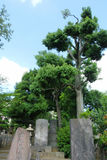 Sengaku籍寺庙 免版税库存照片