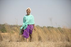 Senhora africana que anda no campo foto de stock
