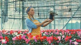 A senhora bonita das hortaliças está olhando uma flor bonita em um potenciômetro video estoque