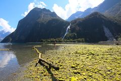 Senhora Bowen Falls, Milford Sound, parque nacional de Fiordland, Nova Zelândia fotografia de stock royalty free