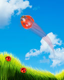 Senhora Bugs Flying Imagem de Stock Royalty Free