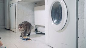 A senhora com um braço biônico está removendo a roupa após o lavagem e um gato que anda ao redor vídeos de arquivo