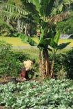 Senhora de trabalho dura na vila Flores Indonésia de Moni Fotografia de Stock