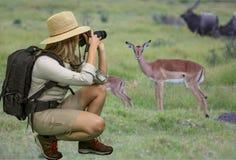 Senhora em Safari Attire Taking Photographs de animais selvagens africanos imagens de stock