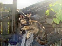 Senhora-gato foto de stock royalty free