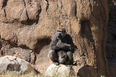 Senhora Gorilla foto de stock