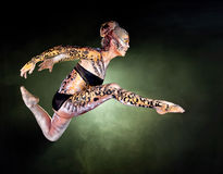 Senhora Leopard BB124727-2 imagem de stock royalty free