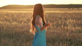 Senhora moreno bonita no campo de trigo no por do sol vídeos de arquivo