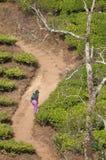 Senhora na plantação Foto de Stock Royalty Free