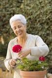 Senhora sênior que poda suas plantas Imagem de Stock Royalty Free