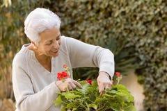 Senhora sênior que poda suas plantas Imagens de Stock